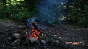 Feuerfokus heraus zum Fokus herein stock video footage