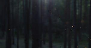 Feuerfunken steigen langsam vor unscharfem Nachtwald stockfotos