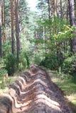 Feuergrube im Wald Stockbild