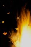 Feuermohnblumen stockfoto