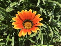 Feuern Sie Blume ab Lizenzfreie Stockfotos