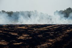 Feuern Sie brennendes trockenes Gras es Gefahr f?r Umwelt ab lizenzfreies stockfoto