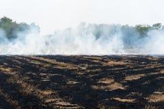 Feuern Sie brennendes trockenes Gras es Gefahr f?r Umwelt ab stockfotografie