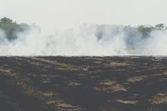 Feuern Sie brennendes trockenes Gras es Gefahr f?r Umwelt ab stockbilder