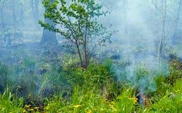 Feuern Sie in Wald 18 ab Stockfotos