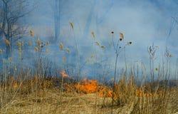 Feuern Sie in Wald 30 ab Stockfotografie
