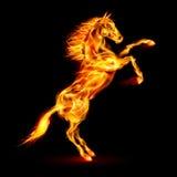 Feuerpferd, das oben aufrichtet. vektor abbildung