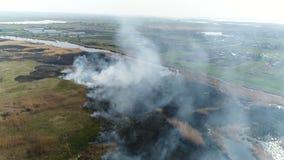Feuerschilfe auf dem Fluss Luftvermessung stock footage