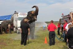 Feuerwehrmann gibt Zirkus-Elefanten ein Bad Stockbild