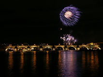 Feuerwerkblume Stockfotografie