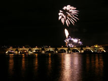 Feuerwerkblume Stockbild