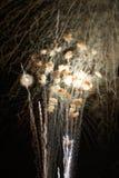 Feuerwerke über dem Ohio lizenzfreie stockfotografie
