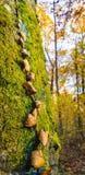 Feuillage au-dessus d'un arbre photos stock