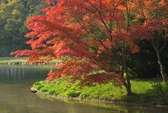 Feuillage coloré Photo libre de droits