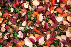 Feuillage coloré Photographie stock libre de droits
