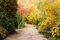 Feuillage coloré en parc d'automne Fond de paysage d'automne Image stock