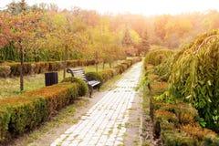 Feuillage coloré en parc d'automne Fond de paysage d'automne Images stock