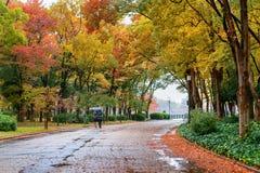 Feuillage coloré en parc d'automne Saisons d'automne Photographie stock