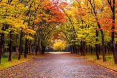 Feuillage coloré en parc d'automne Saisons d'automne Photos stock