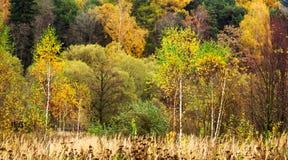 Feuillage coloré en stationnement d'automne Photographie stock libre de droits