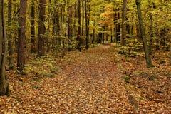 Feuillage couvrant le chemin large dans les bois photos libres de droits