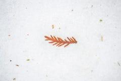 Feuillage d'arbre dans la glace et la neige Photo stock