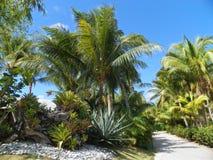Feuillage d'arbres de plantes tropicales Photos stock