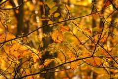 Feuillage d'automne photographie stock