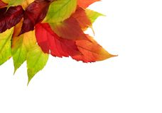 Feuillage d'automne images stock