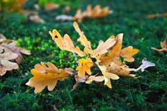 Feuillage d'automne Image stock