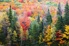 Feuillage d'automne Photo stock