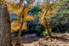 Feuillage d'automne au parc d'état perdu d'érables dans le Texas photo stock