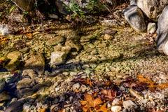 Feuillage d'automne au parc d'état perdu d'érables dans le Texas photographie stock libre de droits