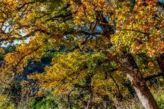 Feuillage d'automne au parc d'état perdu d'érables dans le Texas images stock
