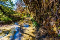 Feuillage d'automne au parc d'état perdu d'érables dans le Texas photographie stock