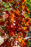 Feuillage d'automne au parc d'état perdu d'érables dans le Texas images libres de droits