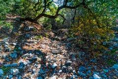 Feuillage d'automne au parc d'état perdu d'érables dans le Texas photo libre de droits