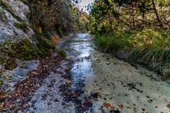 Feuillage d'automne au parc d'état perdu d'érables dans le Texas photos stock