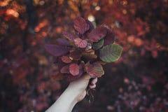 Feuillage d'automne au soleil photographie stock