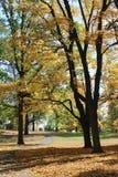 Feuillage d'automne d'or avec le chemin de marche photos stock