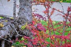 Feuillage d'automne Boise Idaho Albertson Park images libres de droits