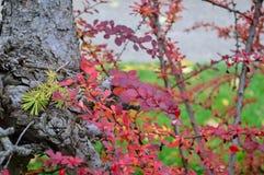 Feuillage d'automne Boise Idaho Albertson Park Images stock