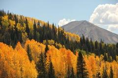 Feuillage d'automne coloré de montagne du Colorado photographie stock