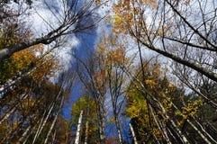 Feuillage d'automne d'automne Image libre de droits