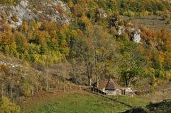 Feuillage d'automne d'automne Photographie stock