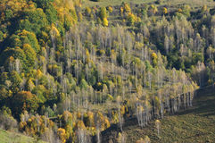 Feuillage d'automne d'automne Images stock