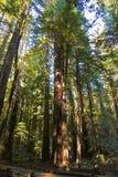 Feuillage d'automne dans Yosemite Images libres de droits