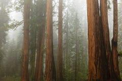 Feuillage d'automne dans Yosemite Images stock