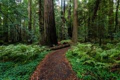 Feuillage d'automne dans Yosemite Photos stock