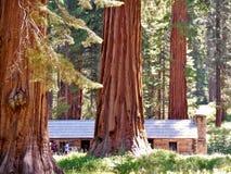Feuillage d'automne dans Yosemite Photo stock